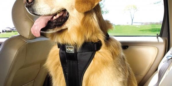 Cachorro com cinto de segurança 2